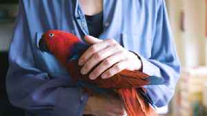 The Parrot Whisperer Can Fix Your Bird Woes [Video]