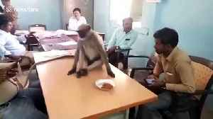Wild monkey spotted at polling station during elections in India [Video]