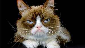 Grumpy Cat Dead At Age 7 [Video]