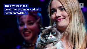 The Internet Mourns the Death of Grumpy Cat [Video]