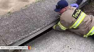 Watch: Firefighter Saves Fawn Trapped In Storm Drain [Video]