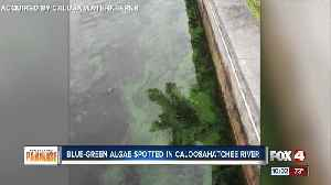 Blue-green algae spotted in North Fort Myers [Video]