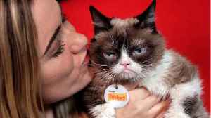 Internet Famous Grumpy Cat Passes Away At 7-Years-Old [Video]