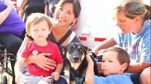 A Dog's Journey Home (E8) – From Hurt To Hope To Happiness [Video]