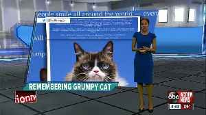 Social media star 'Grumpy Cat' dies at age 7 [Video]