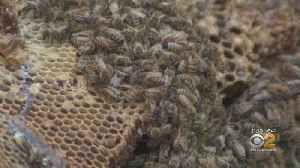 News video: Thousands Of Honeybees Discovered In NJ Home