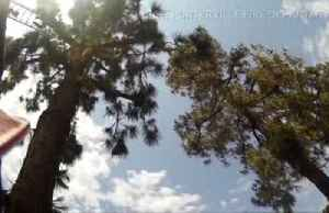 Stranded cat rescued from top of tree in California [Video]