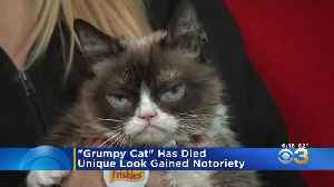 Internet Sensation Grumpy Cat Dead At Age 7 [Video]