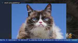Internet Sensation 'Grumpy Cat' Dies [Video]
