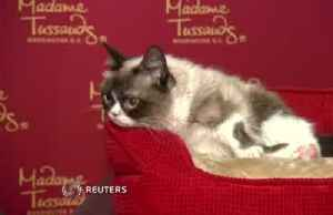 Feline internet sensation Grumpy Cat dies at age 7 [Video]