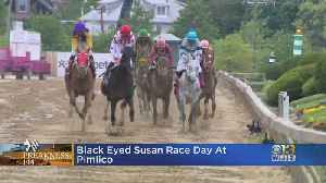 Black-Eye Susan Day At Pimlico [Video]
