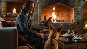 News video: John Wick director Chad Stahelski talks Keanu Reeves and training groin-biting dogs