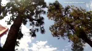 WEB EXTRA: Cat Jumps From Very Tall Tree [Video]