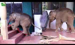 Orphaned Baby Elephants Play in New Rescue Home [Video]