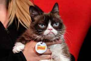 'Grumpy Cat' Leaves Behind Business Empire and Some Copycats [Video]