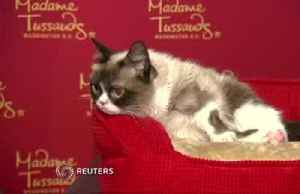 Grumpy Cat dies at age 7 [Video]