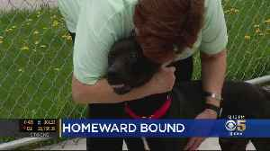 Wayward Dog Belonging To California Family Found In Michigan [Video]