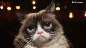 News video: Grumpy Cat Dies, Family Says Her Spirit Will 'Live on Through Her Fans'