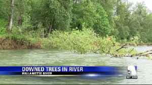 Downed trees in rivers pose threat as summer approaches, officials say. [Video]