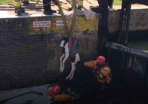 Trapped New-Born Foal Rescued From Lock on English Midlands Waterway [Video]