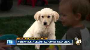 Team 10: Uptick in deathly ill puppies [Video]