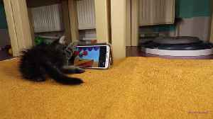 Rescued kitten loves watching 'Tom & Jerry' on smartphone [Video]