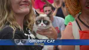 Internet Sensation 'Grumpy Cat' Passes Away [Video]