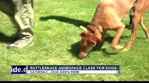 Rattlesnake Avoidance Training Course available tomorrow [Video]