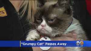 Internet, Pop Culture Sensation 'Grumpy Cat' Dead At 7 [Video]
