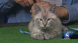 KSBW Pet of the Weekend: Boba! [Video]