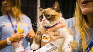 News video: The Internet Bids Farewell To Its Most Famous Feline: Grumpy Cat
