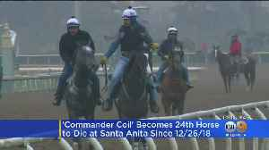 24th Horse Euthanized At Santa Anita Park Following Shoulder Injury [Video]