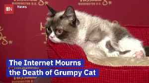 Grumpy Cat Is No Longer With Us [Video]