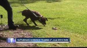 Dog owners take pets to rattlesnake avoidance training class [Video]
