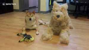 Fur's up! Dog owner creates life-sized pooch out of fur sheddings [Video]