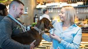 Not The Wurst Way To Spend A Day! Hundreds Of Sausage Dogs Enjoy Pawsecco And Pupcakes At Doggy Cafe [Video]