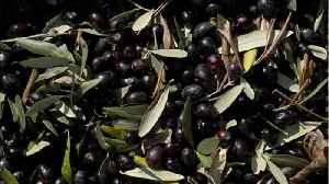 How Traditional Olive Oil Is Made [Video]