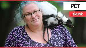 Nurse battling anxiety and depression tells how her symptoms have eased thanks to pet SKUNK [Video]