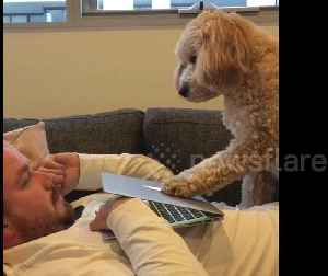 Dog demands attention by pushing down laptop screen [Video]