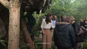 Duchess of Cambridge climbs her tree house at Chelsea Flower Show [Video]