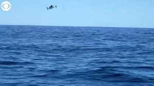WEB EXTRA: SnotBot Drone Studies Whales [Video]