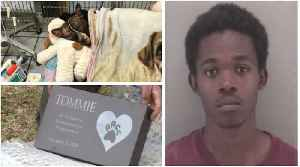 Man Arrested for Killing Tommie, the Dog Set on Fire in a Virginia Park [Video]