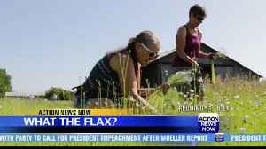 Chico flax farm offers new crop [Video]
