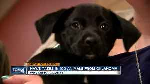HAWS of Waukesha County rescues 100 dogs and cats from Oklahoma ahead of storm outbreak [Video]