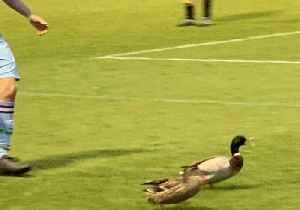 Soccer Player Chases Ducks Off Field During Cup Final [Video]