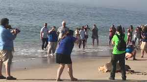 Crowd gathers to watch sea turtle released into the ocean [Video]