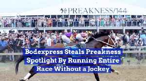 This Race Horse Doesn't Need A Jockey [Video]