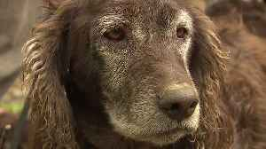 Hunting Dogs Used to Help Threatened Turtle Species [Video]