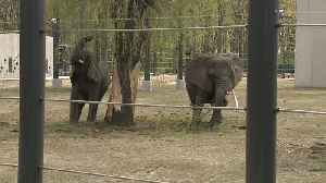 As other zoos phase out elephant exhibits, Milwaukee County bets future on theirs [Video]
