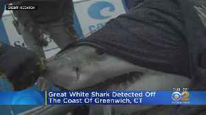 Great White Shark Returns To Long Island Sound [Video]